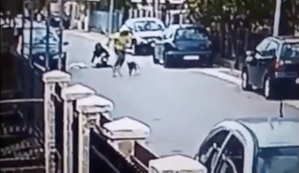 Street Dog Saves Woman From Being