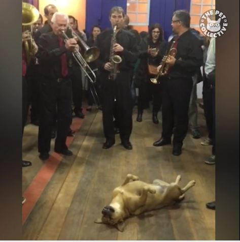 Would Your Dog Sleep Through A Live Band?!