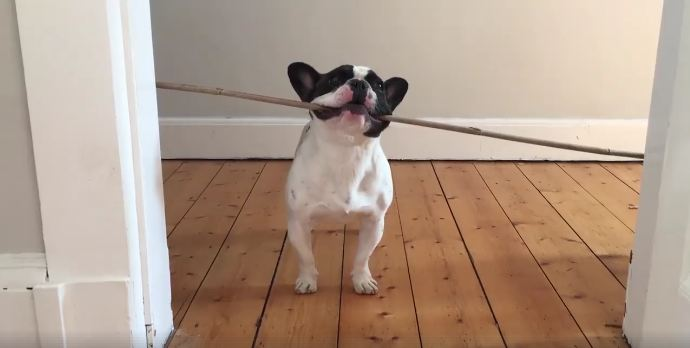 Funny Doggo Compilation Will Brighten Your Day