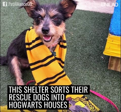 """Pawgwarts! Orlando Shelter """"Sorts"""" Dogs Into Harry Potter-Themed Houses!"""