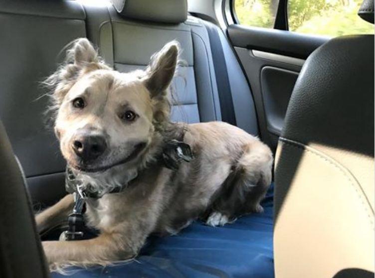 Perfect Dog Rescue Milpitas
