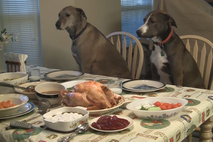 Loving Man Prepares Thanksgiving Feast For His Dogs