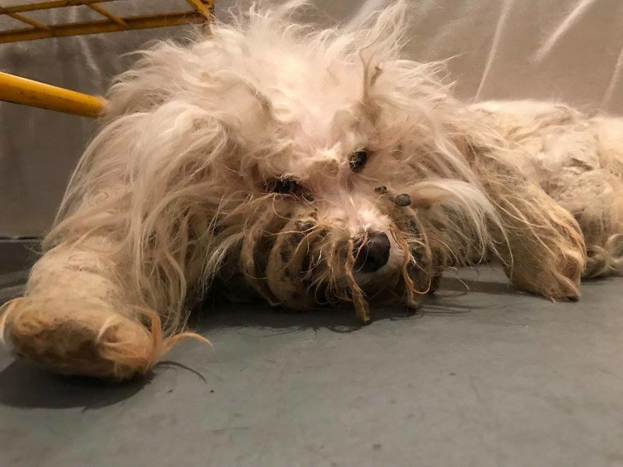 Stray Dog Can't Stop Smiling After Rescuers Shave Off Her Matted Fur