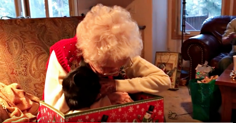 Purrfect Present Has Grandma Shedding Tears of Joy
