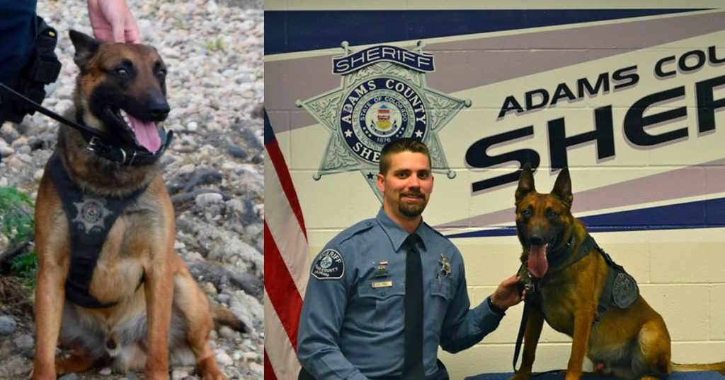 Assailant Attacks Police Officer, Doesn't Realize His K9 Partner Was There To Keep Him Safe