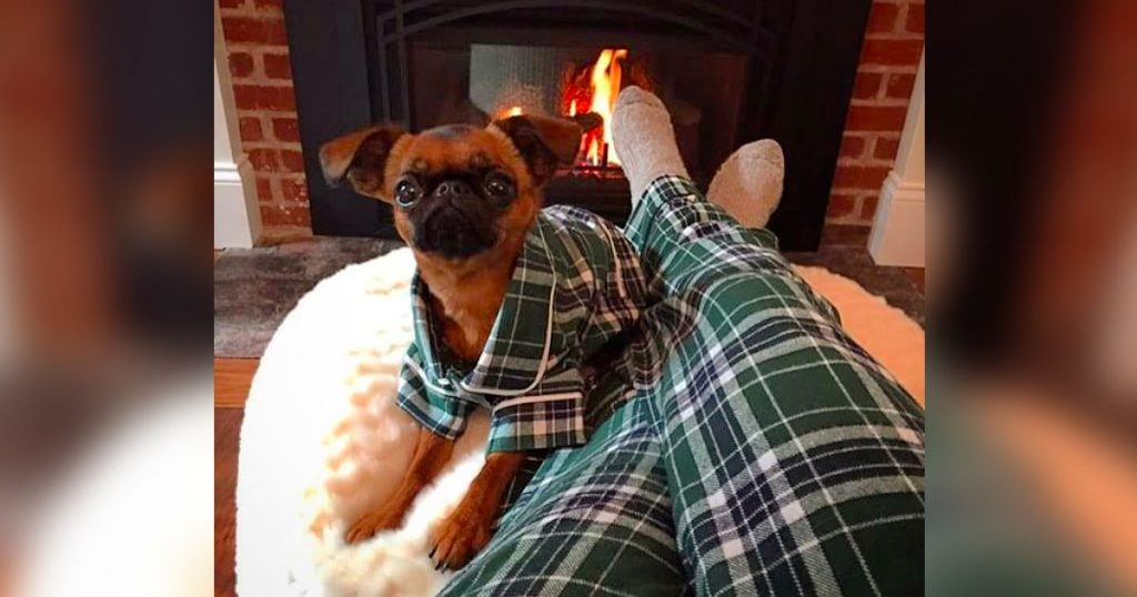You Can Now Buy Matching Pajamas With Your Dog, And We Don't Know Why It Has Taken This Long