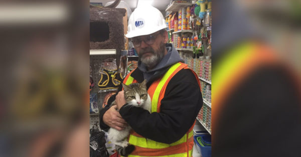 This Cat Has A Lot To Be Thankful For After A Brave Rescue In The NYC Subway