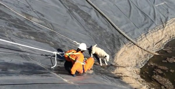 Puppy And Her Mom Trapped In Water Pit Until These Men Came Along