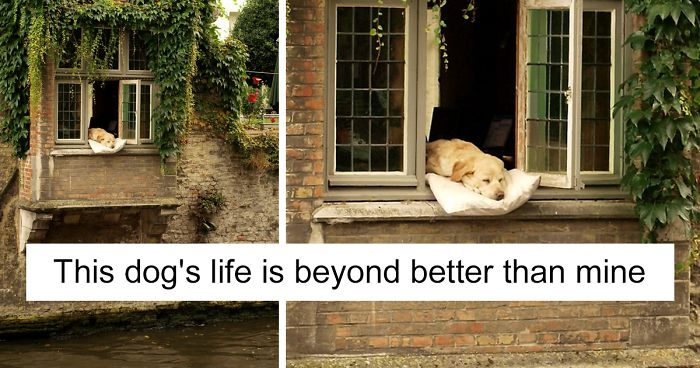Spoiled Dogs That Live Better Than You Ever Will
