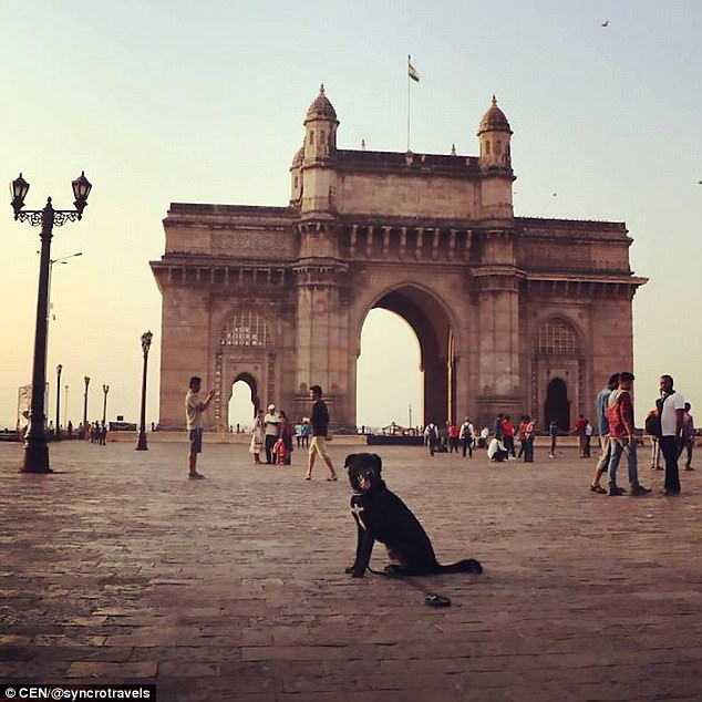 Couple's Dog Was Stolen While Visiting India, And They Feared They'd Never See Him Ever Again