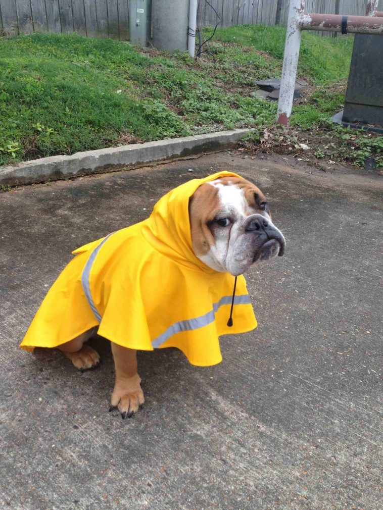 24 Pets Who Instantly Regret Going Outside