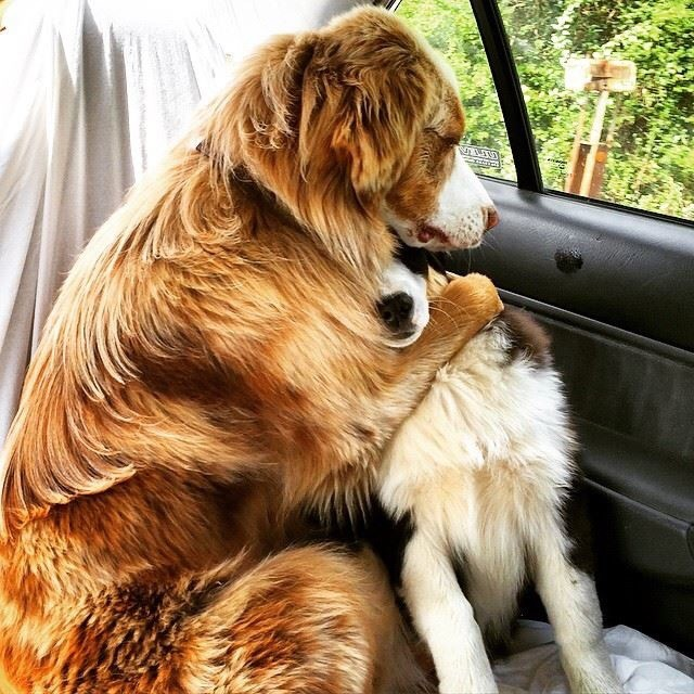 22 Dogs Who Just Realized They're Going To The Vet, And This Betrayal Hurts