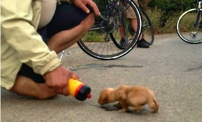 Cyclist Adopts Abandoned Puppy Found While Out on a Ride