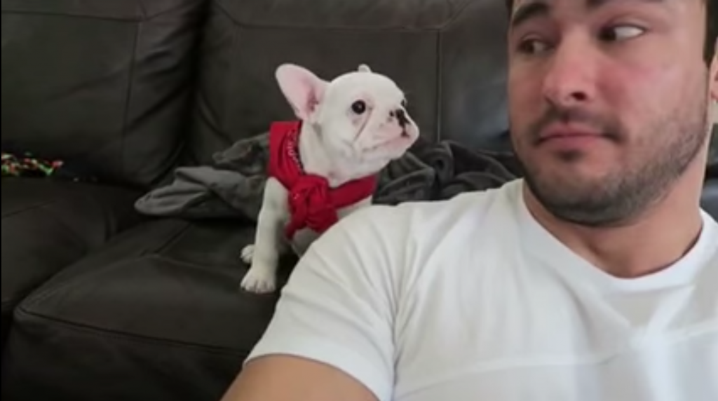Owner Compliments Dog On His 'Handsome' Looks – Dog's Response Has Him Dying Of Laughter