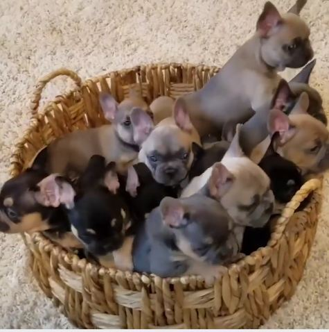Basket O' Puppies Is The Video Break Everyone Needs