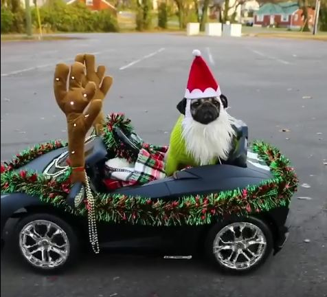 Doug The Pug Goes Out Cruisin' For Christmas