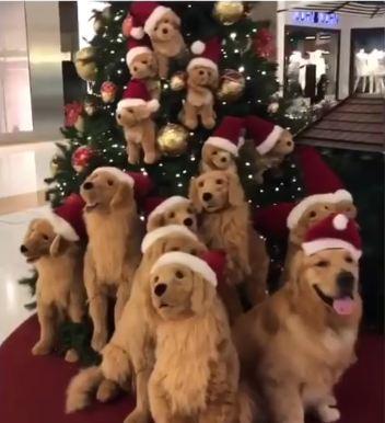 A Golden Christmas, Guaranteed!