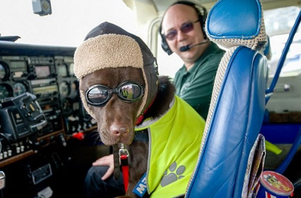 Dog Gets Honorary License to Fly