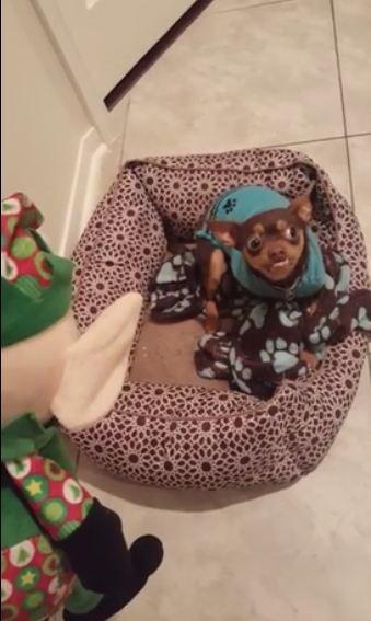 Grinch-like dog really hates elf toys