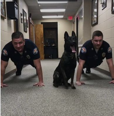 Police Dog Pumps Out Push-Ups With Fellow Officers In Adorable Viral Video