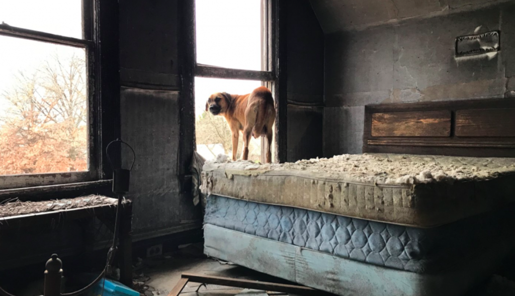 Mama Dog And Her Newborn Puppies Sought Shelter In A Decrepit House In Freezing Temperatures