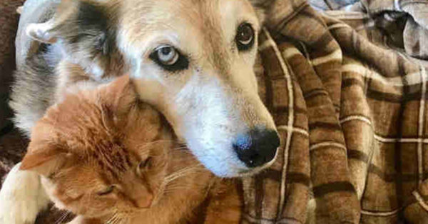 Once Terrified Of Dogs, This Rescued Cat Is Loving And Living More And More Each Day