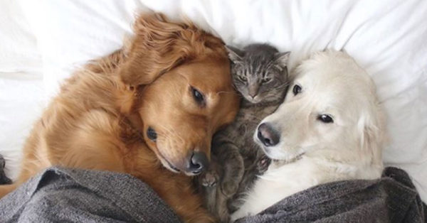 Two Loving Pups Plus One Cuddly Cat Are Adding Millions Of Smiles To Instagram