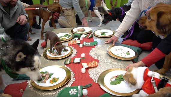 Overlooked Shelter Dogs Selected For Best Holiday Ever
