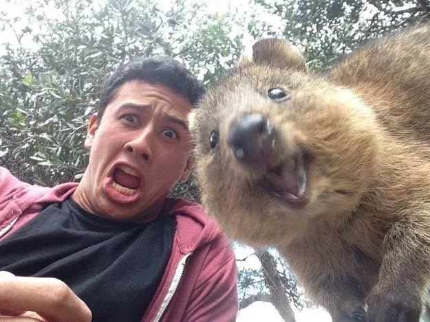 19 Animal Photobombs That Are So Funny, You'd Swear They Were Done On Purpose