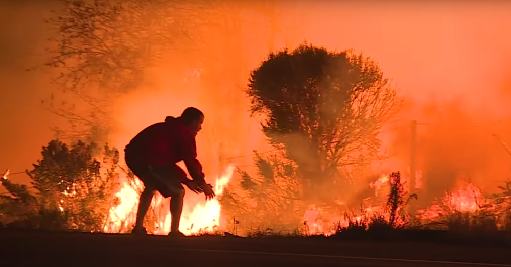 Anonymous Hero Braves A Blazing Inferno To Save A Wild Rabbit