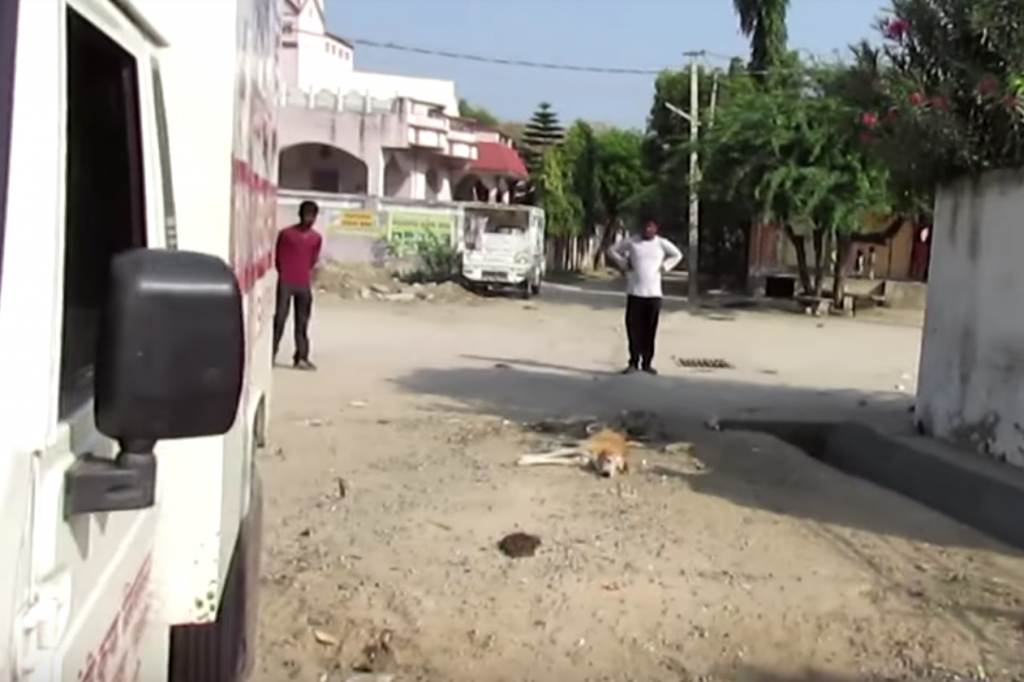 Animal Aid Comes Across Dog Unable To Stand In Middle Of The Street