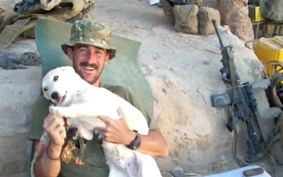 Marine Met A Stray Dog In Afghanistan And Knew He Couldn't Go Back To The U.S. Without Him