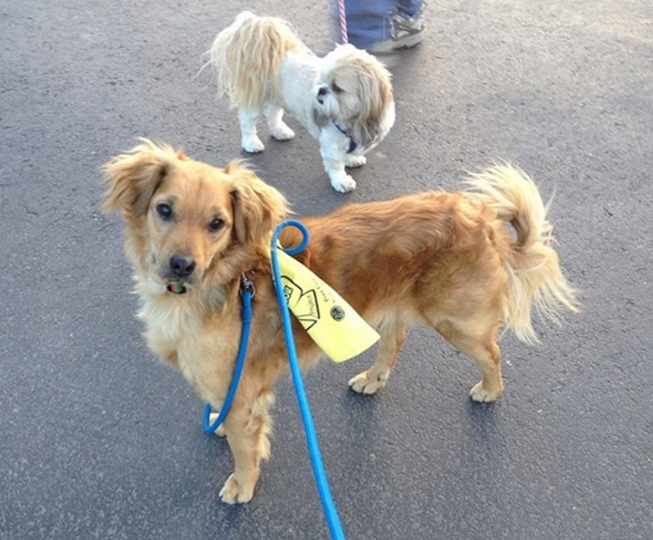 What You Need To Know When You See Dogs Wearing Yellow Ribbons Or Leashes