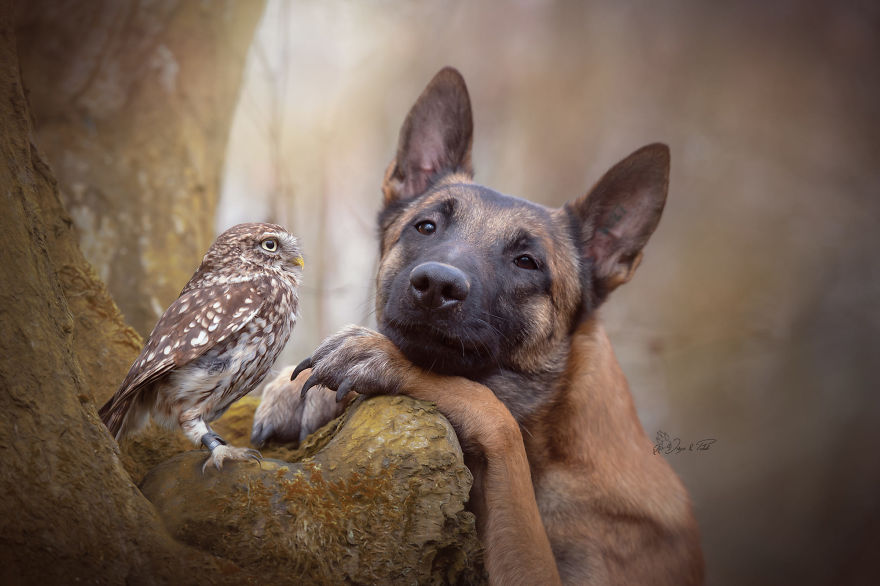 Photos Of Ingo The Dog And His Owl Friends Is The Only Thing You Need To See Today