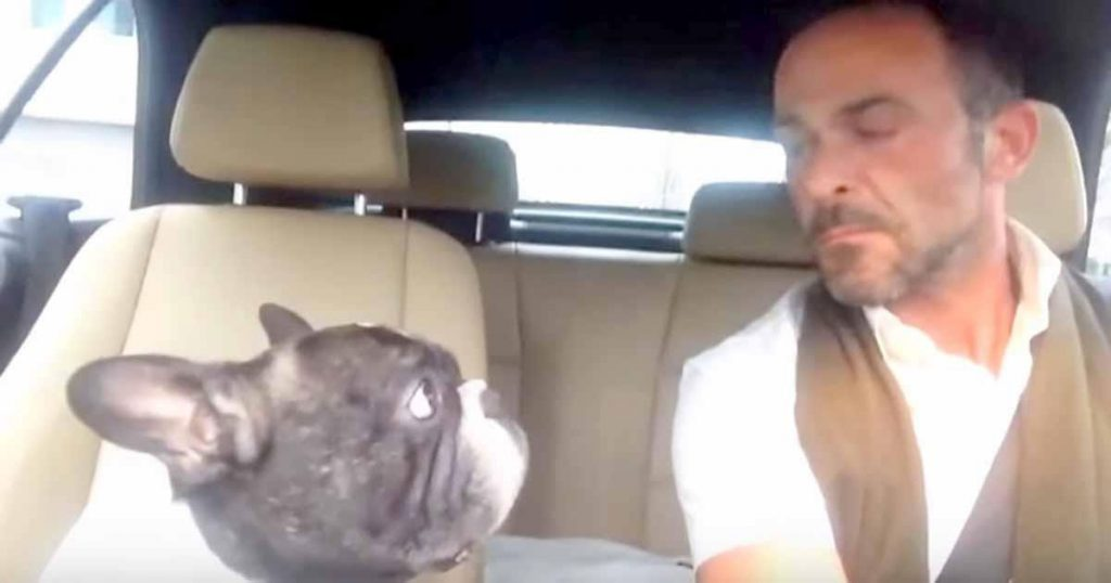 Owner's Favorite Song Comes On Radio, Then Dog Shows Everyone It's His Favorite Too