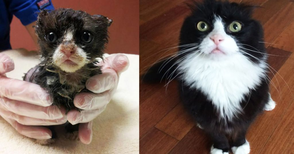 Pictures Showing Stunning Recovery of Rescued Cats— The Transformation Is Truly Incredible