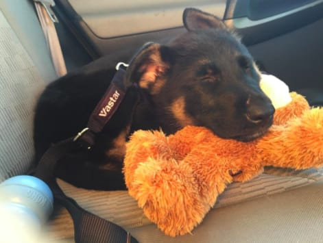 People Swear By This $8 Dog Seat Belt To Keep Their Pets Safe