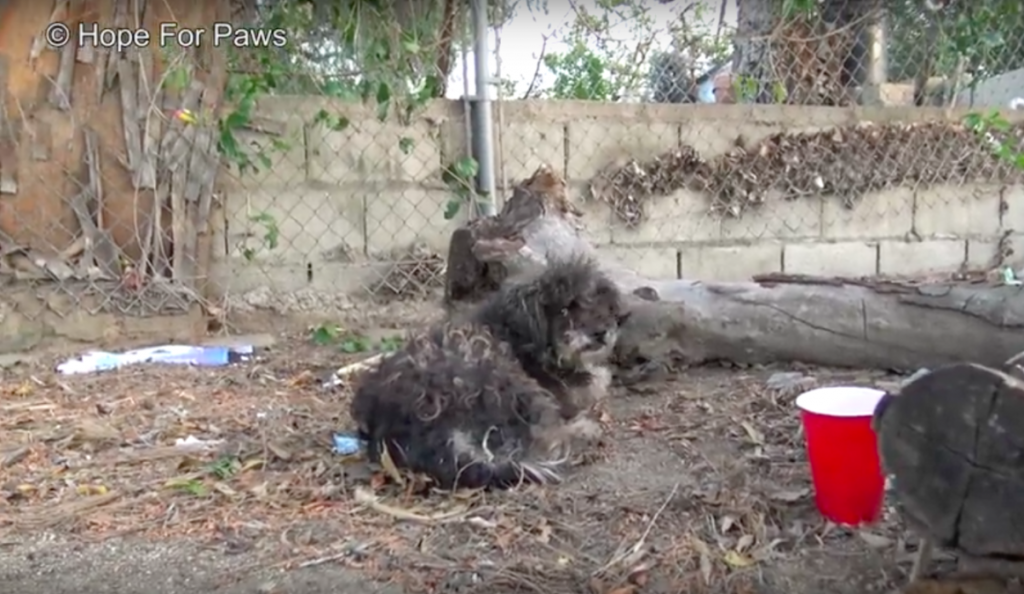 When Kids Found This Dog, They Thought He Was Dead. But They Knew Just Who To Call For Help…