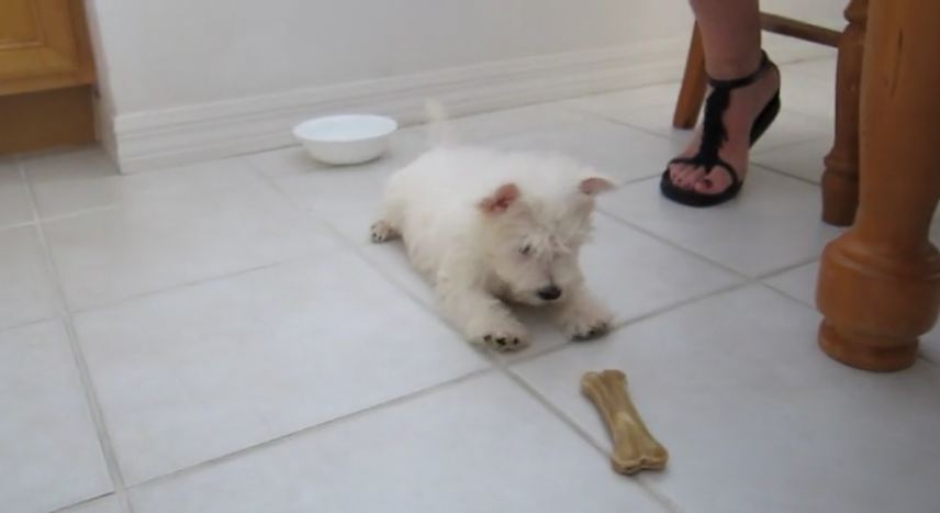 8-week-old puppy suspicious of bone