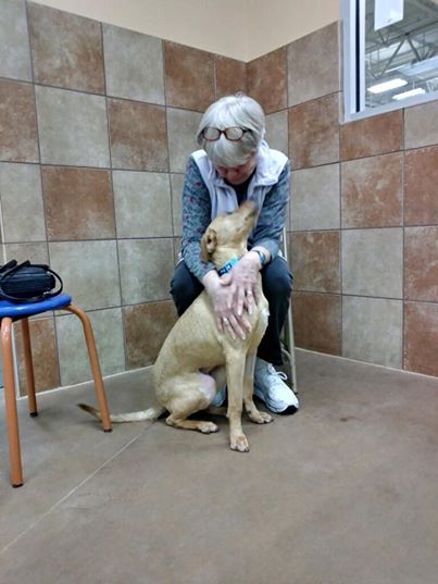 Woman Finds Kindred Spirit In Shelter Dog Who Shared Her Heart Condition