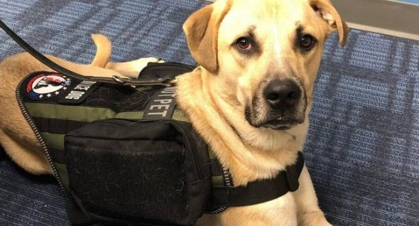 """""""Our Bond Goes Through The Leash."""" Struggling Veteran & His Service Dog Are An Inseparable Team"""