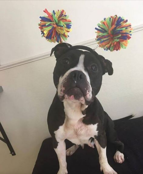 Longest Shelter Resident Wants Nothing More Than A New Home