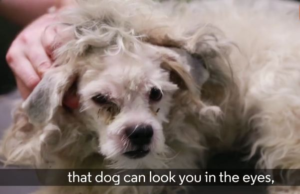 This Man Became A Groomer Just To Help Shelter Dogs!