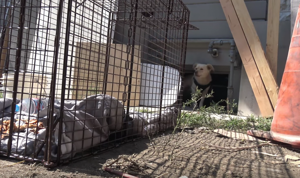 Dog Left Behind When Owners Moved Away Quickly Learns Not All Humans Are Awful