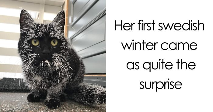Times Animals Experienced Snow For The First Time, And Their Faces Say It All