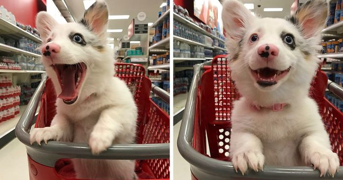 Dog Goes To Target, Has The Best Time Of Her Life