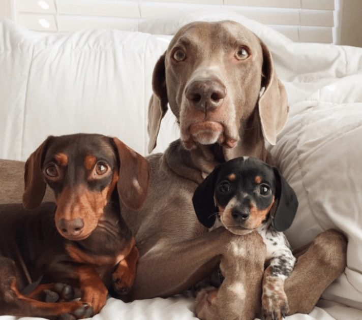 Little Sister Is Introduced To The Inseparable Dogs, And The Dynamic Is Forever Changed