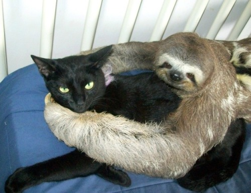 Random Animal Hugs Because We Need More In The World Today
