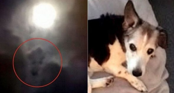 A Dog In The Clouds: Grieving Family's Full-Moon Photo Goes Viral!
