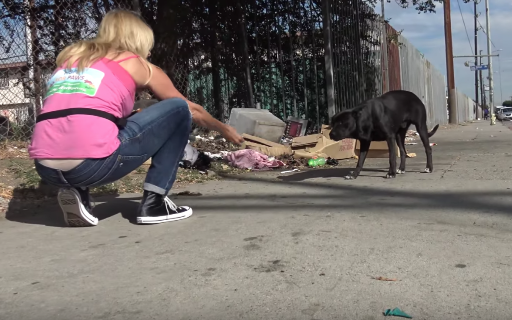 Dog Seen Eating From A Pile Of Trash Was So Afraid Of Humans